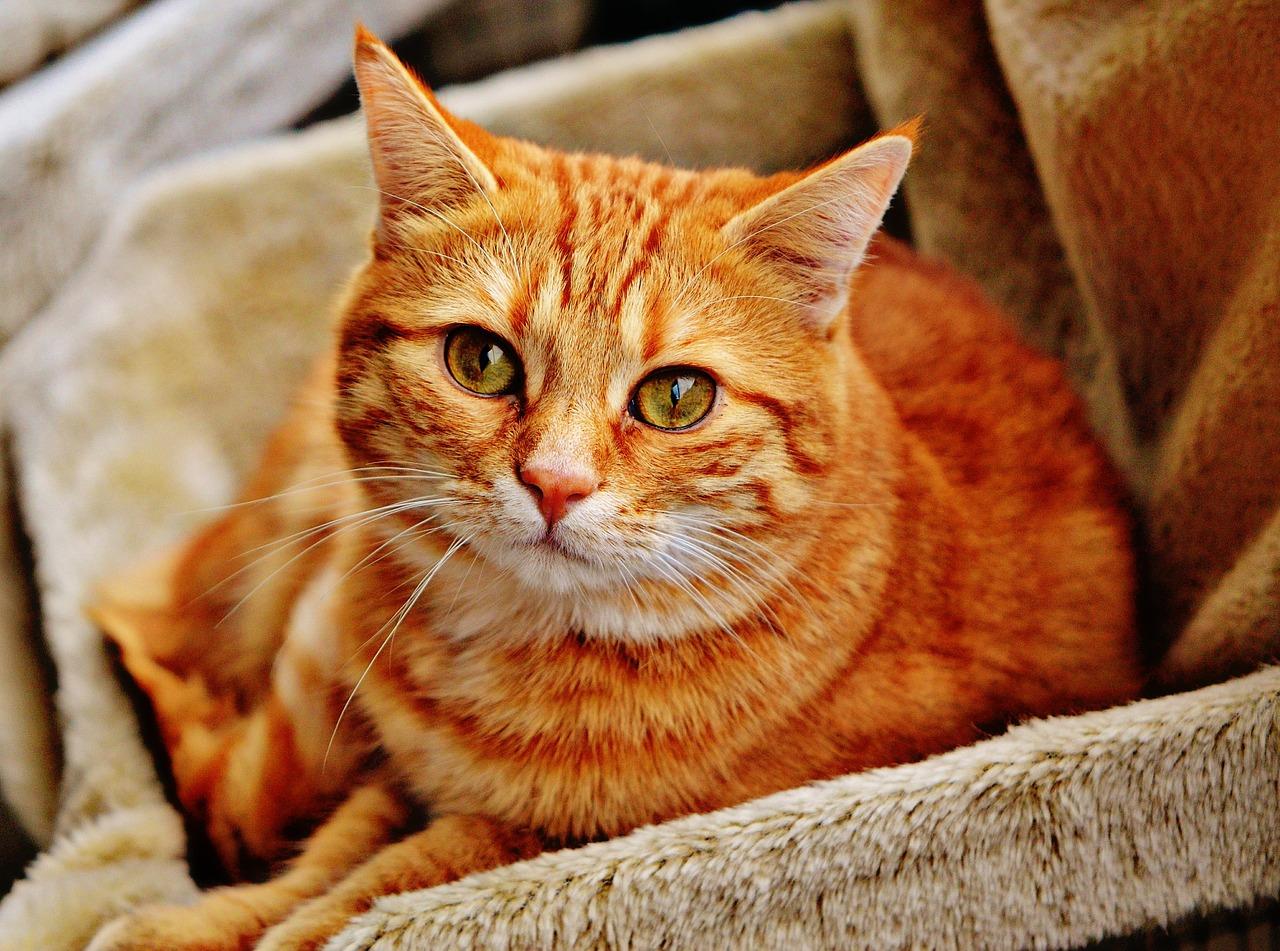 leczenie neurologiczne kotów