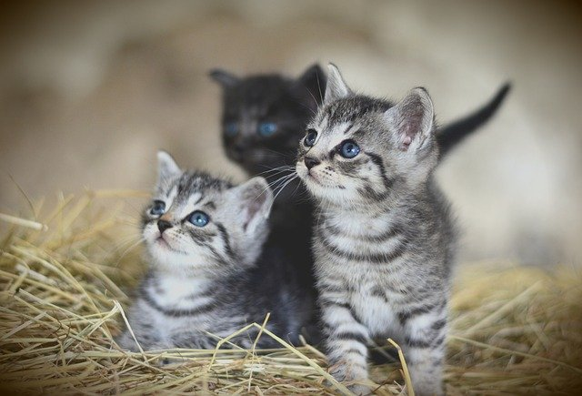 koty lecznica