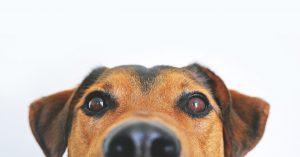 psy leczenie
