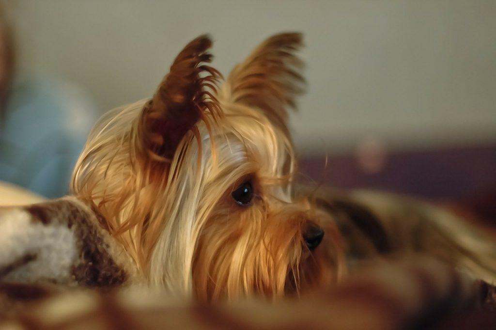 Neurolog - leczenie psów